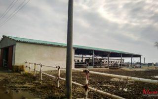 Přístřešek pro hovězí dobytek – Veškovce, Veľké Kapušany